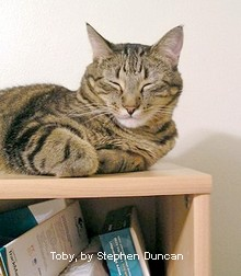 A dozing cat lies on a desktop shelf