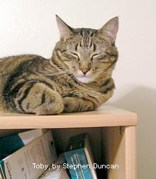 A dozing cat lies on a desktop shelf