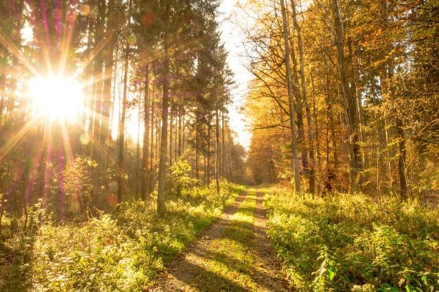 A rising sun shines through trees to illuminate a path