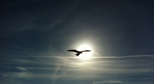 Photo of a bird silhouetted against the sun.