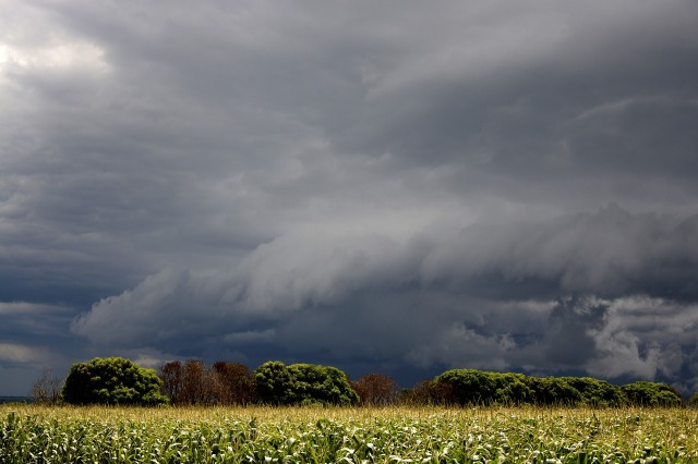 storm clouds over corn