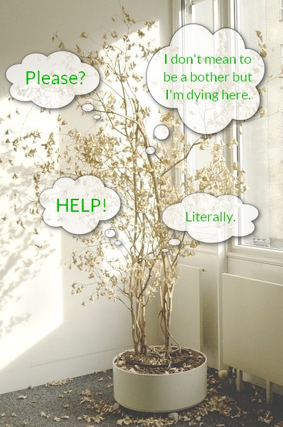 "Photo of houseplant dropping leaves with thought bubbles saying ""HELP!,"" ""Please?,"" ""I don't mean to be a bother but I'm dying here,"" and ""Literally."""