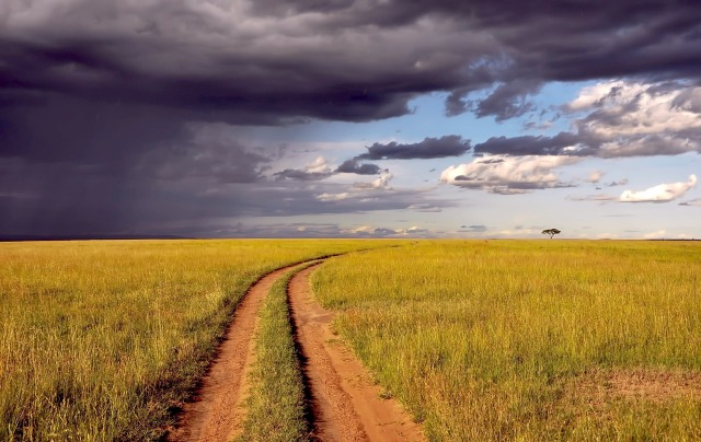 A dirt road through an open savannah curves in the distance towards the clearing sky and a lone tree