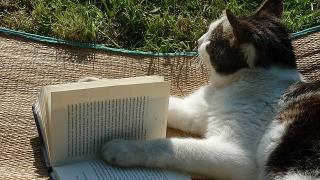 A cat lies on a woven straw mat on the grass. She has a book between her paws, and is staring meditatively off into space.